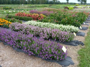 Trialing plants in Litchfield, Michigan