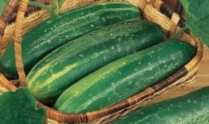 Cucumber Straight 1935