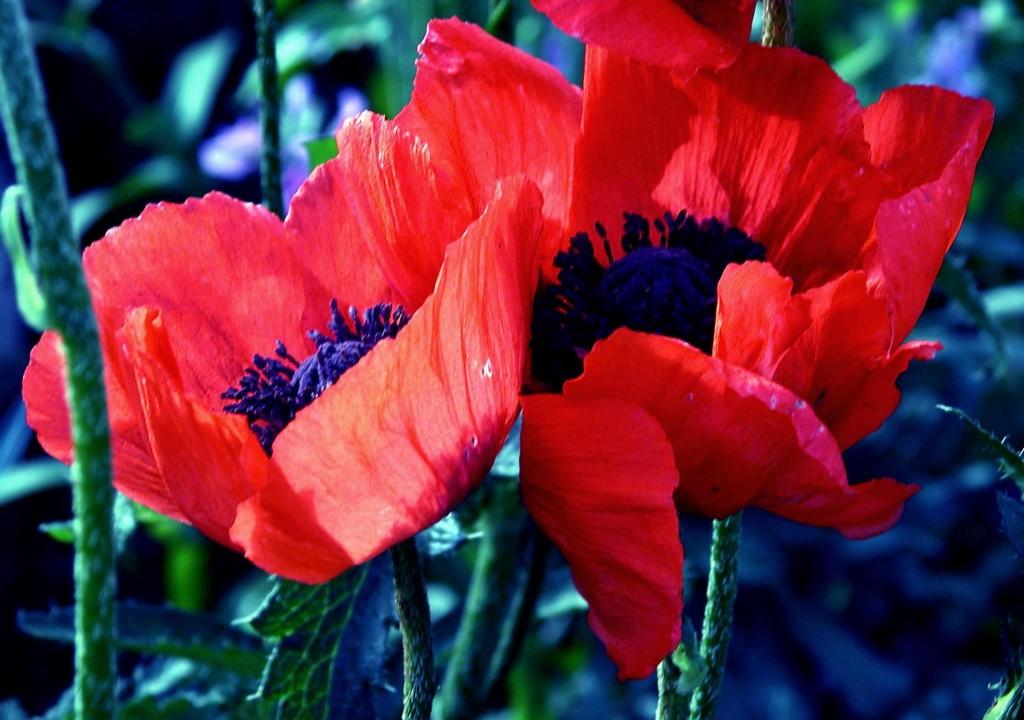 Influences of Opium on English Romantic Literature
