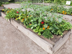 Community Garden with raised beds
