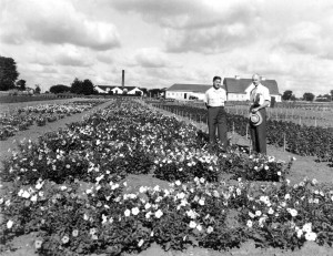 Oakview Station of Ferry Morse Seed Company July 1941